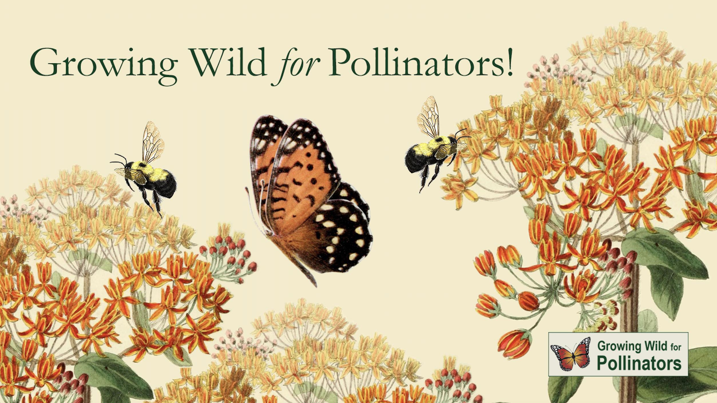 Growing Wild for Pollinators Massachusetts